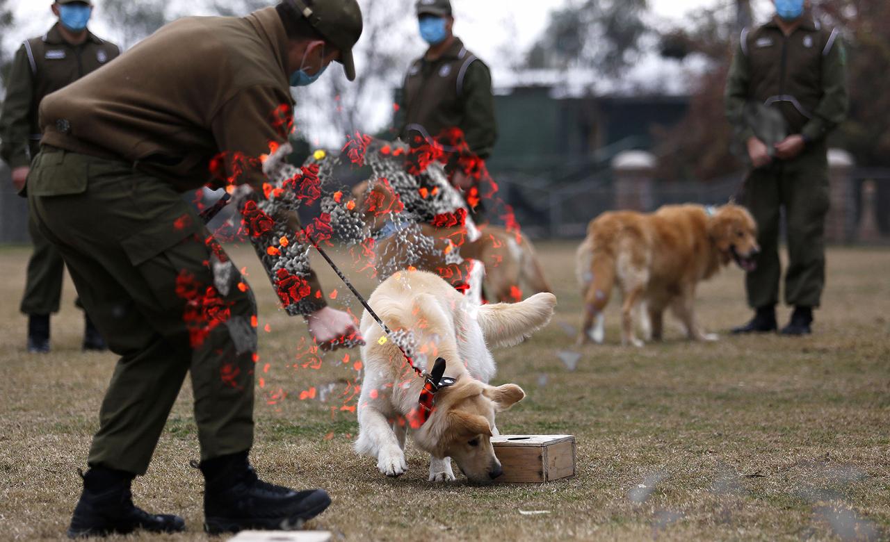 Dogs can sniff Coronavirus in human saliva - German research